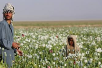 Στα παπαρουνοχώραφα του Αφγανιστάν